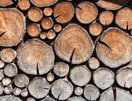 Brennholz aus dem Stadtforst