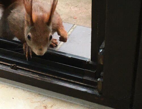Entzückend: Eichhörnchen Eduard