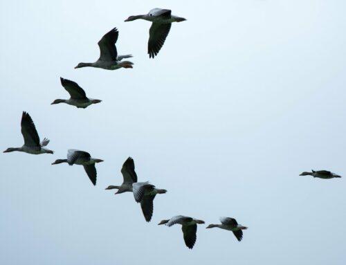 Alle Vögel sind schon… weg?!